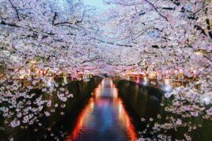Japonya Sakura Festivali   Japonya