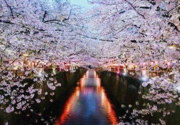 Japonya Sakura Festivali | Japonya